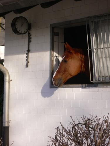 Pferdeuhrzeit